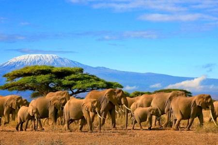 туры в африку